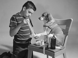 1950s Dog on Chair with Paw Being Bandaged Photographic Print