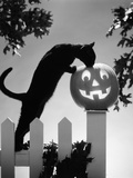 1970s Black Cat and Jack-O'-Lantern on Fence Photographic Print