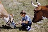 Boy Feeding Cows Photographic Print by William Gottlieb