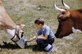 Boy Feeding Cows Photographic Print by William P. Gottlieb