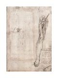Drawing of Human Leg Giclee Print by  Leonardo da Vinci