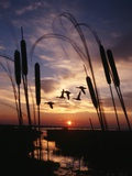 1980s Silhouetted Ducks Flying in Sunset Photographie