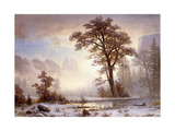 Valley of the Yosemite -Snow Fall Giclee Print by Albert Bierstadt