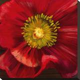 Chocolate Poppy I Stretched Canvas Print by  Dysart