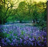 Bluebell Wood I Stretched Canvas Print by Pete Kelly