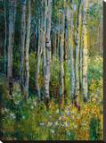 Aspens in Spring Stretched Canvas Print by  Patrick