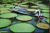 Lotus Leaves At Dong Thap Stretched Canvas Print by Nhiem Hoang The