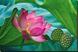 Lotus Paradise Stretched Canvas Print by Nhiem Hoang The