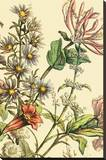 Furber Flowers IV - Detail Stretched Canvas Print by Robert Furber