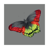 Wild Papillon Giclee Print by Louise McNaught