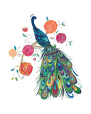 Splendid Peacock Giclee Print by Kim Anderson