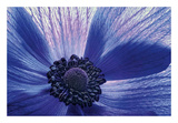 Canto del vento Poster di Dawn LeBlanc