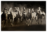 Dream Horses Poster by Lisa Dearing