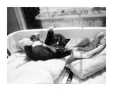 Kitten Laundry Prints by Kim Levin