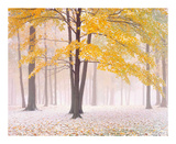 Early Autumn Snow Prints by Jim Becia