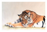 Sleeping Tiger Print by Jan Henderson