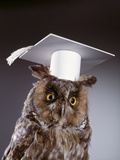 1990s Wise Old Owl Wearing White Mortarboard Graduation Cap Photographic Print by D. Corson