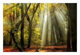 Yellow Leaves Rays Print by Lars Van de Goor