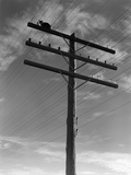 1940s Cat Sitting on a Power Line Telephone Pole Stranded Alone Outdoor Photographic Print by H. Armstrong Roberts