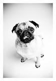 Piggie 7 Kunstdrucke von Susan Sabo