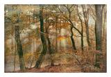 You Can't Hide Your Rays for Me Prints by Lars Van de Goor