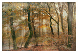 You Can't Hide Your Rays for Me Print by Lars Van de Goor