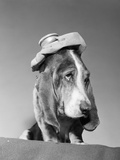 1960s Basset Hound with Ice Bag Pack on Top of His Head Sick Hang over Headache Photographie par D. Corson