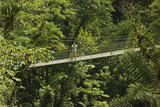 Visitor at Arenal Hanging Bridges Where Rainforest Canopy Is Accessed Via Walkways Photographic Print by Rob Francis