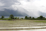 Rice Paddy Fields Photographic Print by Annie Owen