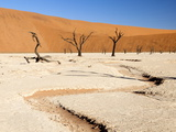 Dried Mud Pan with Ancient Camelthorn Trees and Orange Sand Dunes in the Distance Photographic Print by Lee Frost