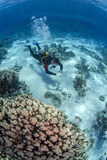High Angle View of a Scuba Diver Diving in Shallow Water Close to Coral Reef Photographic Print by Mark Doherty