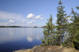 Young Scots Pine Trees (Pinus Sylvestris) Growing Near Rocky Shore of Lake Saimaa Photographic Print by Nick Upton