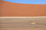 Springbok and Orange Sand Dune in the Ancient Namib Desert Near Sesriem Photographic Print by Lee Frost