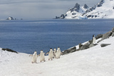Chinstrap Penguins (Pygoscelis Antarctica) Walking Up a Glacial Ice Cap Photographic Print by Gabrielle and Michel Therin-Weise