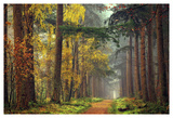 Colors of the Forest Posters by Lars Van de Goor
