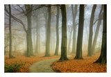 Misty Twisty Print by Lars Van de Goor
