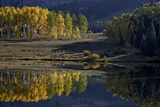 Yellow Aspens Among Evergreens in the Fall Reflected in a Lake Photographic Print by James Hager
