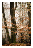 Bronze Tree Prints by Lars Van de Goor