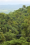 Jungle at Arenal Hanging Bridges Where Rainforest Canopy Is Accessible Via Walkways Photographic Print by Rob Francis