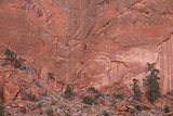 Salmon-Colored Sandstone Wall with Evergreens Photographic Print by James Hager