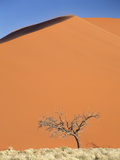 Dead Camel Thorn Tree Against the Orange Sand of Elim Dune Photographic Print by Lee Frost