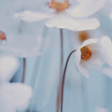 Spring Beauty I Blue Prints by Alicia Bock