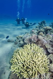 Coral Reef and Three Scuba Divers, Naama Bay, Sharm El-Shiekh, Red Sea, Egypt, North Africa, Africa Photographic Print by Mark Doherty