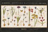 Jess Aiken - Histoire Naturelle I - Art Print