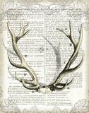 Regal Antlers on Newsprint I Reprodukcje autor Sue Schlabach