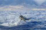 Hawaiian Spinner Dolphin (Stenella Longirostris) Photographic Print by Michael Nolan