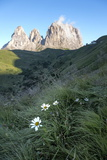Wild Flowers and the Dramatic Sassolungo Mountains in the Dolomites Near Canazei Photographic Print by Martin Child