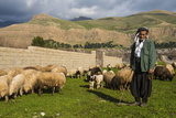 Shepherd with His Herd of Sheep in Ahmedawa on the Border of Iran Photographic Print by Michael Runkel