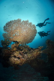 Silhouette of Two Scuba Divers Above Table Coral Photographic Print by Mark Doherty