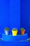 Potted Plants and Bright Blue Paintwork Fotografie-Druck von Matthew Williams-Ellis